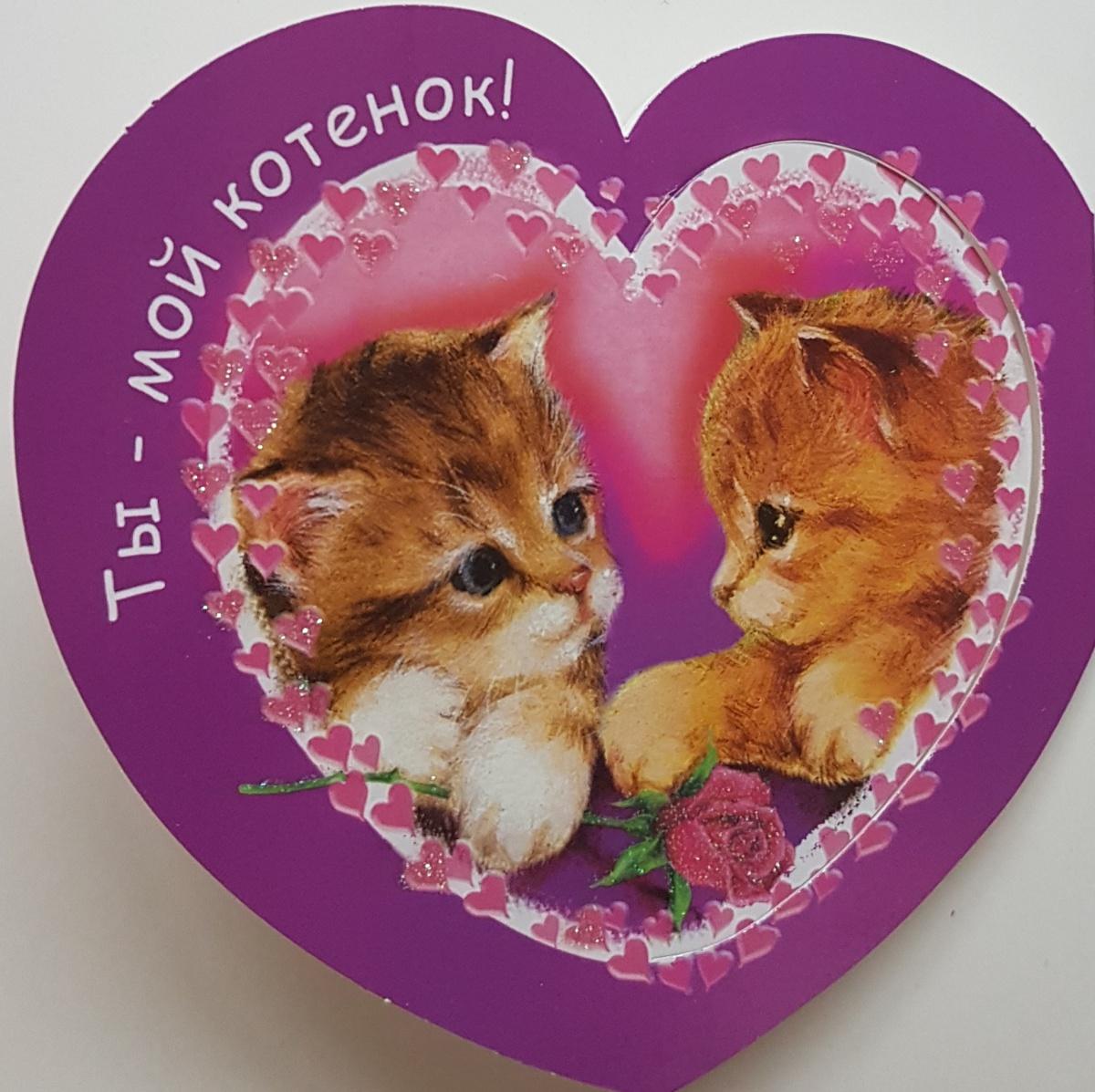 любимому котеночку картинки популярный стиль